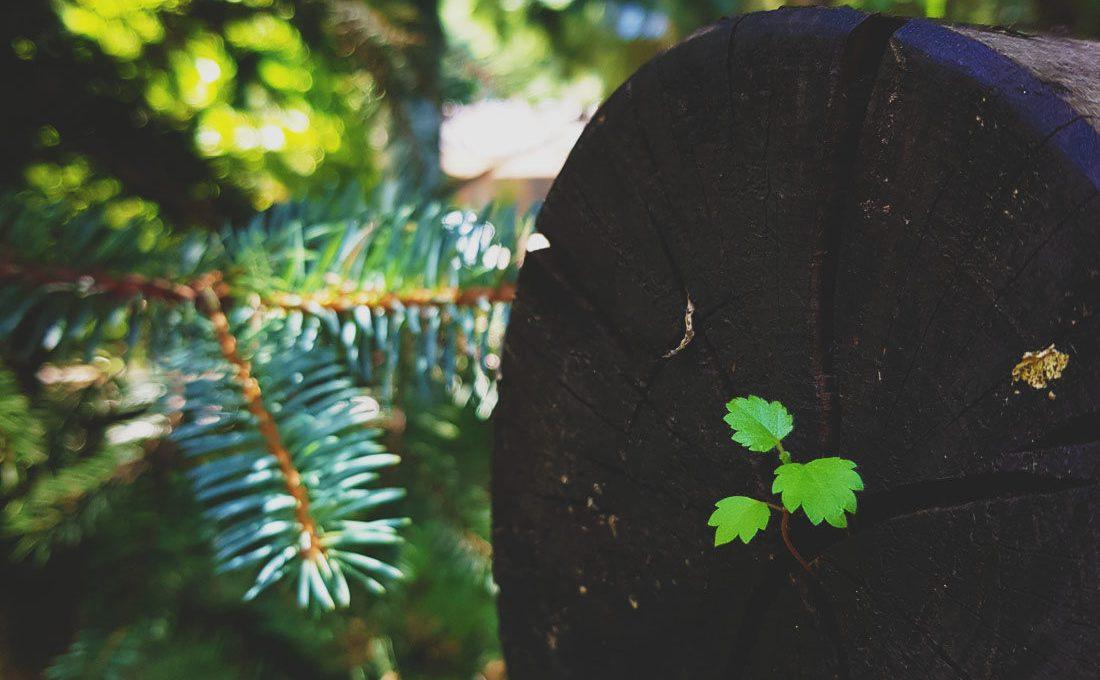 green leaves wood log