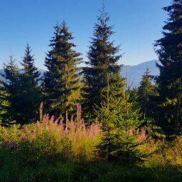 trees flowers mountain