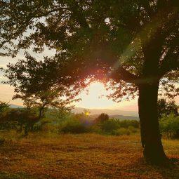 autumn tree sunset