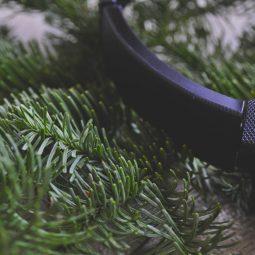 sony wireless headphones on fir branch