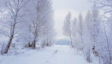 winter scenery snow passage