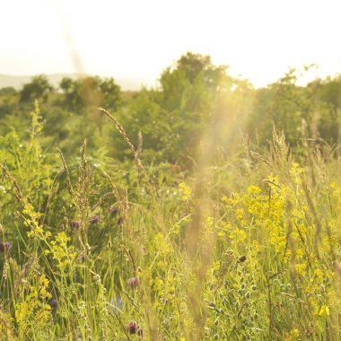 summer field of flowers