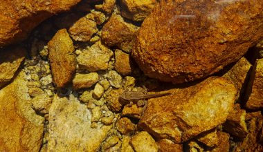 little frog in a mountain lake with rocks